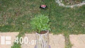 ΓΛΑΣΤΡΑΚΙΑ  για αρωματικά φυτά